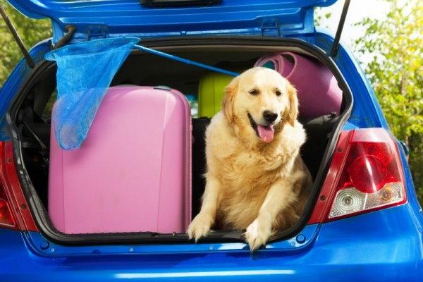 Urlaub für Hundehalter