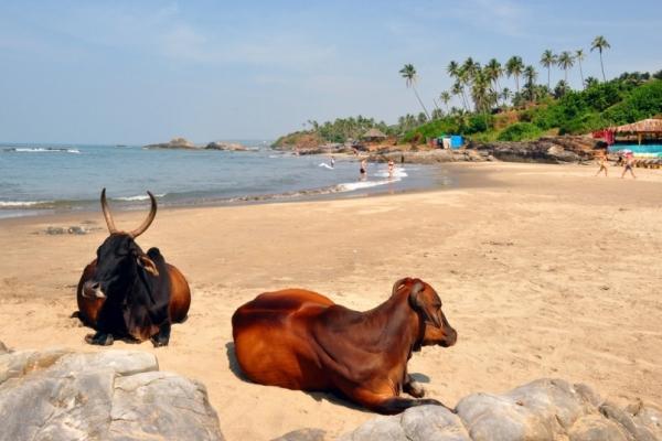 Indien – Goa als perfekter Einstieg