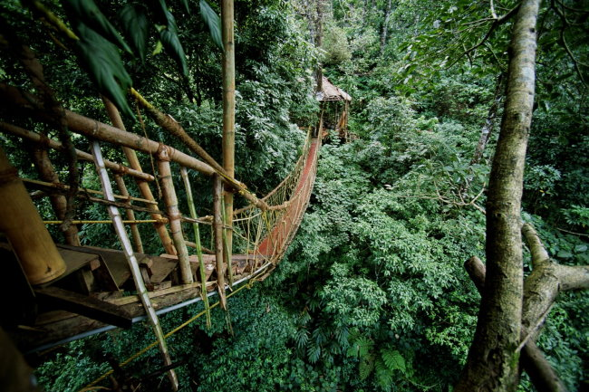 Hängebrücke beim Tree House Resort in Indien