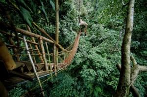 Hängebrücke beim Tree House Resort in Indien