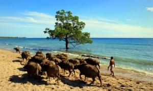 Land und Leute in Osttimor