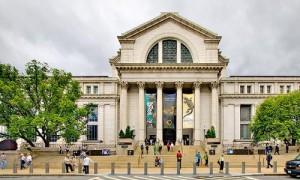 Das Naturkundemuseum in Washington